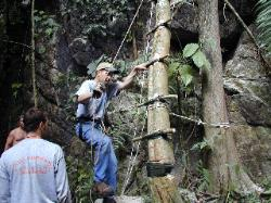 A ladder made from a tall tree growing next to the cave wall.